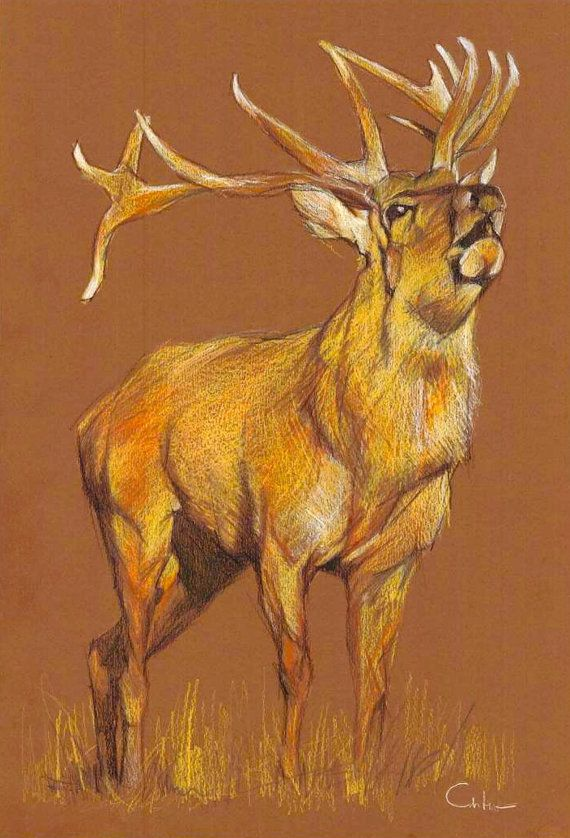 Deer color pencil drawing Wildlife Wall Art by ... Realistic Elephant Drawing
