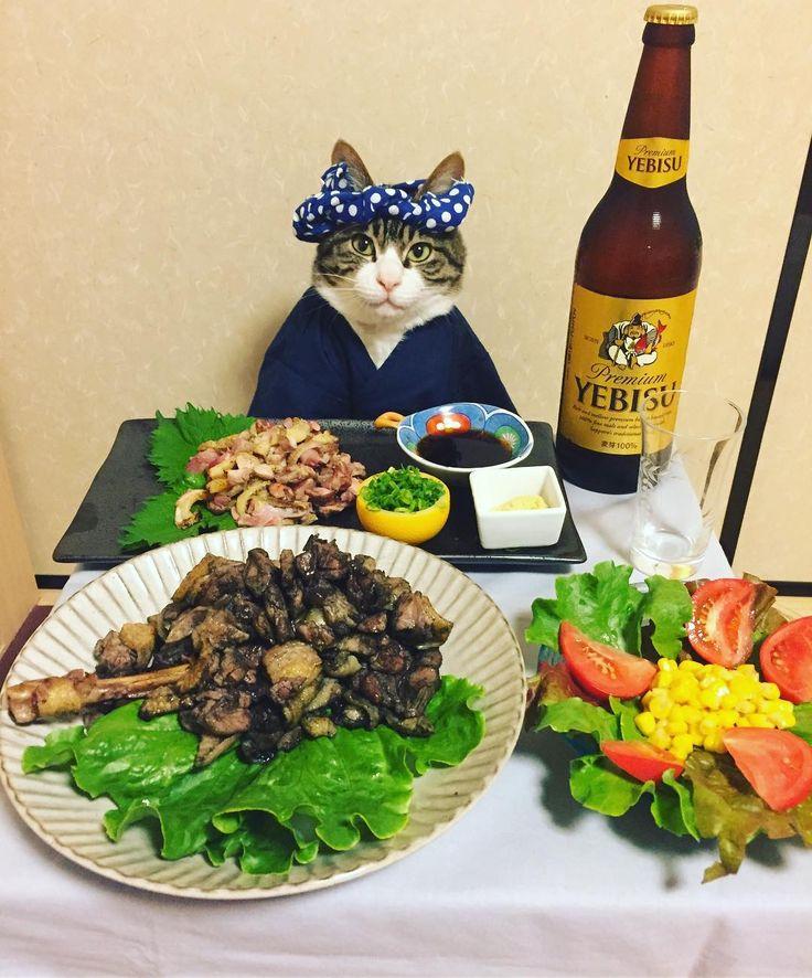 いいね!11.2千件、コメント128件 ― @rinne172のInstagramアカウント: 「地鶏(Charcoal-broiled Chicken) #cat#cats#catstagram#catsofinstagram…」