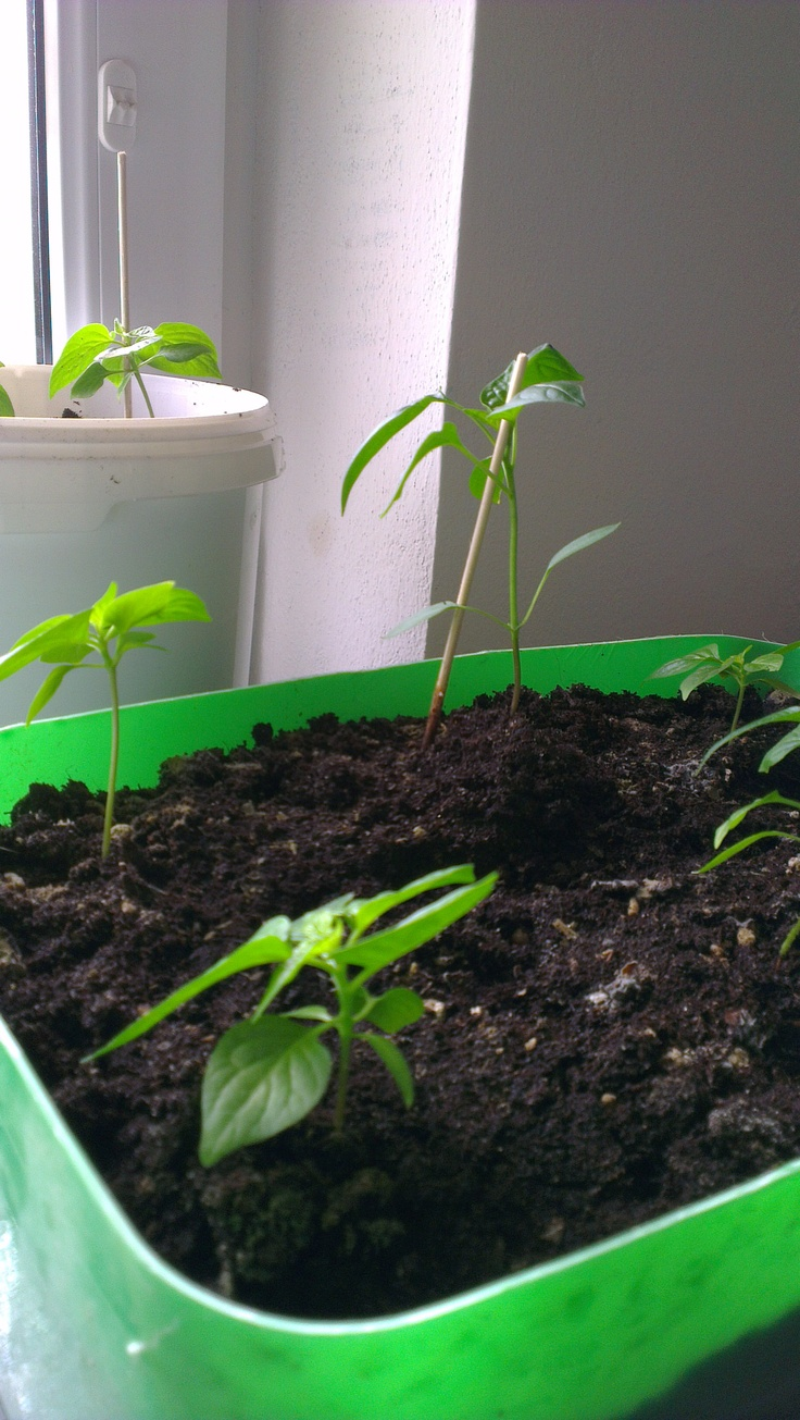 I don't know why there are such big differences in growth of a plants...