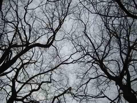 ветви деревьев - Google Search