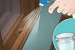 Com estas 7 dicas, você vai manter aranhas e insetos bem longe de sua casa!