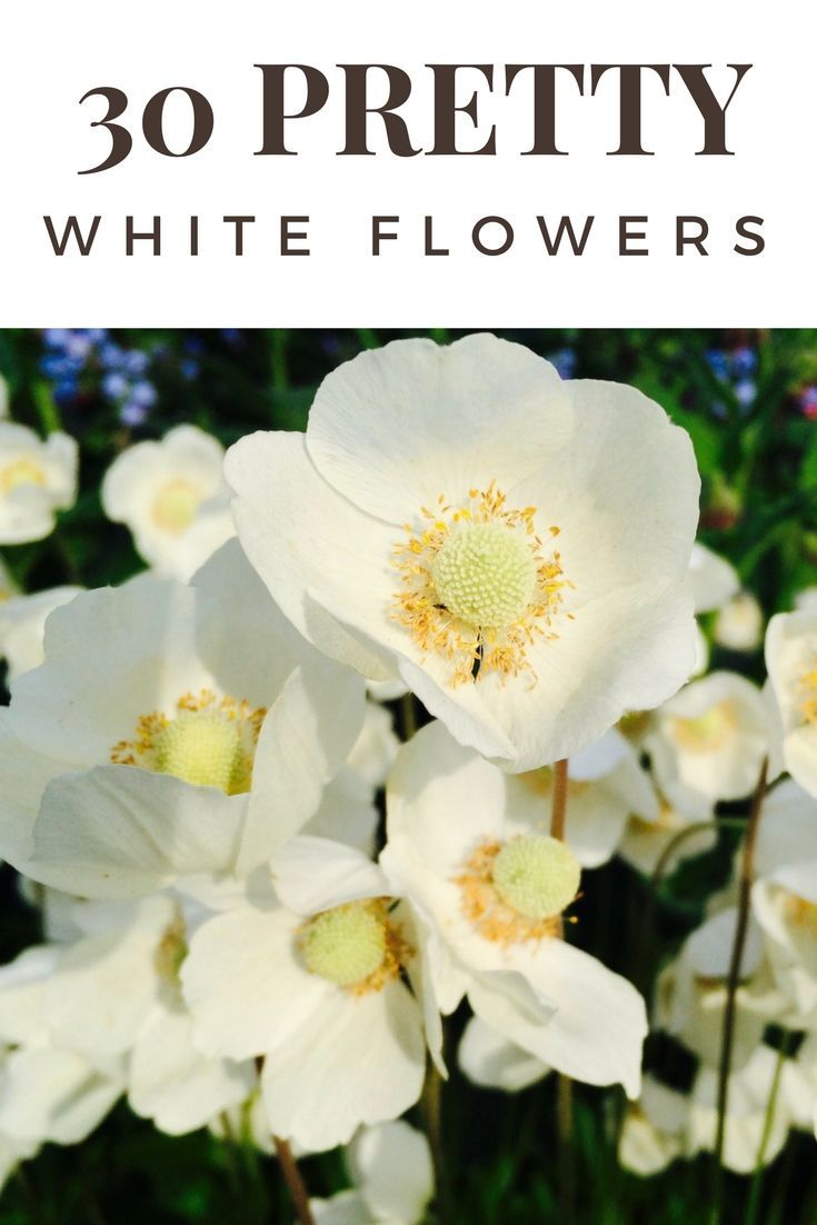 My 30 Favorite Types Of White Flowers For Your Gardens A To Z