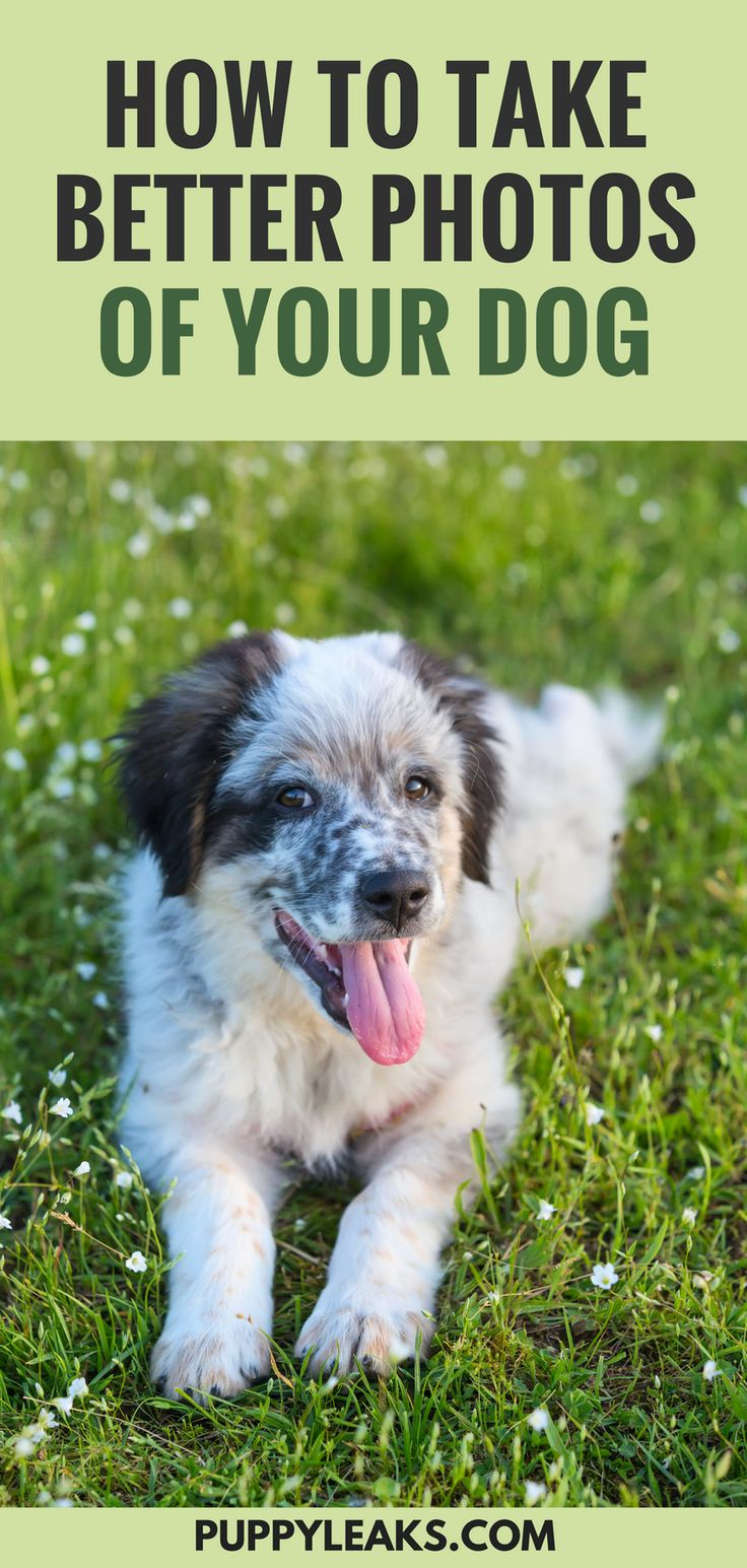Natural Motion Sickness Remedy For Dogs