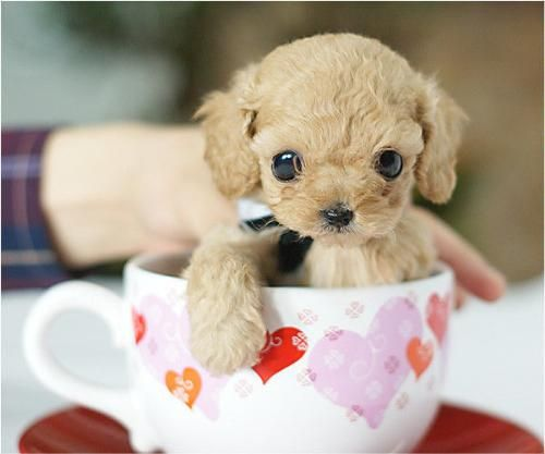 hello. i was just wondering if i could borrow a cup of cute please?
