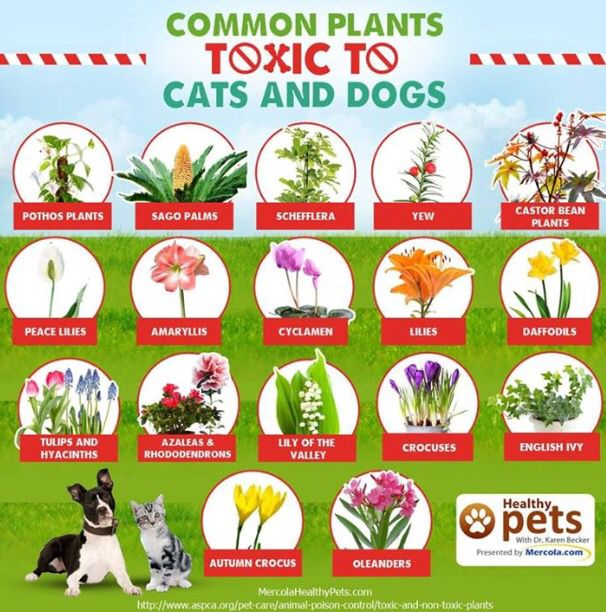 1000 images about dogs cats fish turtles on pinterest Houseplants not toxic to cats