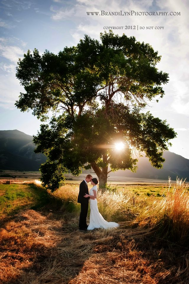 Breathtaking photo of bride & groom under tree with sun shining through the branches - Brandi Lyn | Utah Wedding and Newborn Photographer for Utah Wedding and Newborn Photography: Alisha & Justin 7.21.12 | Utah Wedding Photographer, Northern Utah Wedding Photographer