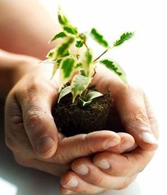 Todo lo que es bueno para el medio ambiente es un trabajo (parte 2) on http://quenergia.com: Outdoor Ideas, Garden Trees, Gardening Ideas, Quiz, Going Green, Earth Day, Well, Garden Stuff