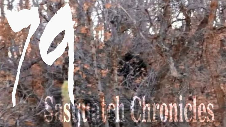 Sasquatch Chronicles SC EP:79 Is Bigfoot Real? By Jack