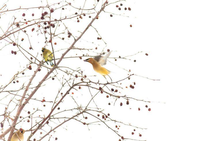 amarillo y luz by Joan Solo on 500px