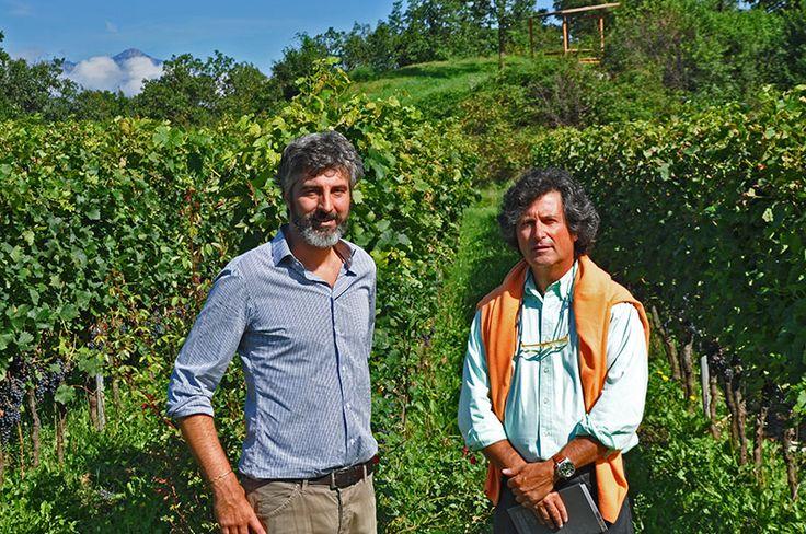 Mountain Pinot Noir among bears and wolves with Martin Mainenti at Borgo dei Posseri, Trentino, Italy