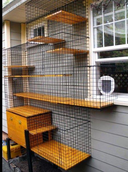 model kandang kucing yang cocok diletakkan di dinding rumah
