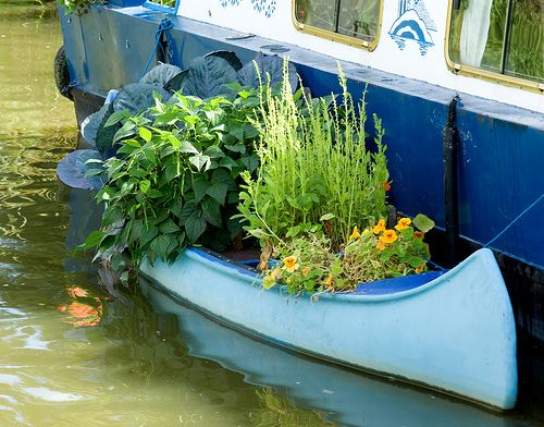 Veg garden alongside a boat. Brilliant!