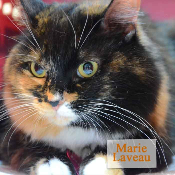 ADOPTED!  Marie Laveau is a beautiful Diva in search of the perfect person