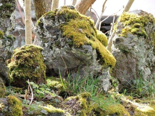 Cap de pedra.  Auvergne