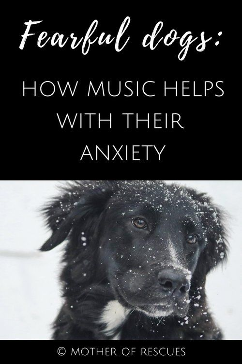 Fearful Dogs and the Power of Music — Mother of Rescues  music | reactive dogs | fearful dogs | anxiety | fear | calm down | calming | soothe | dog training | reactivity