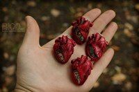 Анатомическое сердце / полимерная глина / сердце / кровь / стимпанк /