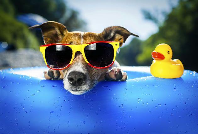 Cão gozando o verão.