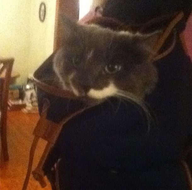 Rocky in my sisters backpack lool
