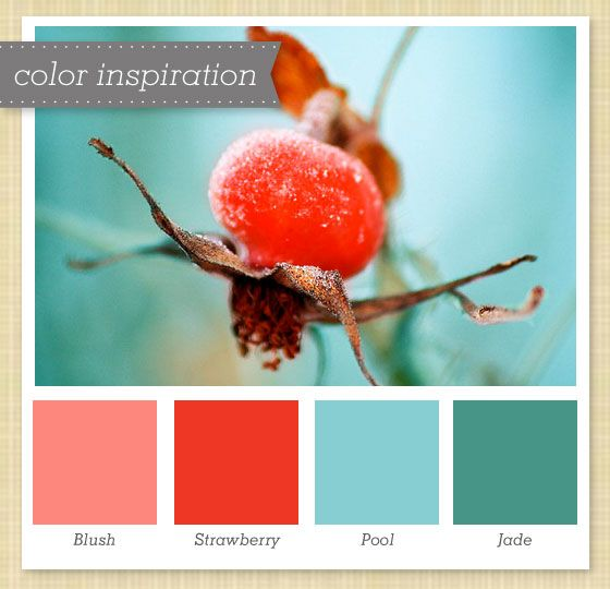 An unexpected source of inspiration for a pretty aqua and coral combination