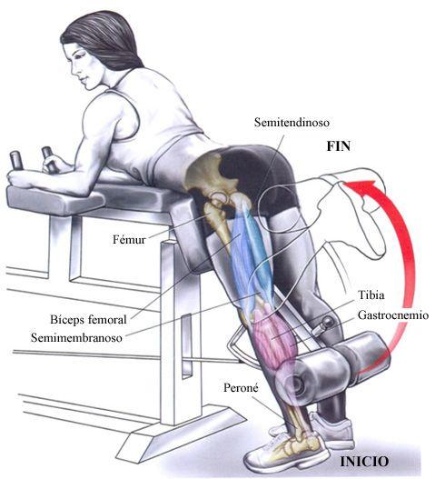 Ejercicios de musculación que vas a realizar en el gimnasio. Técnica correcta de los ejercicios.
