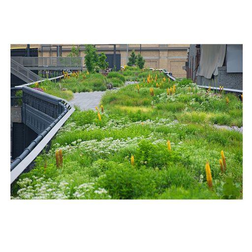 Piet oudolf high line gardening pinterest high line for Piet oudolf plant list