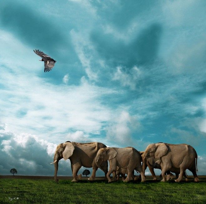 30 Award Winning National Geography Animal Photography examples - elephants