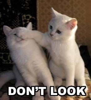 Cats Helping Cats. #cats #funny #kitties http://buzznet.com/~g93d15b
