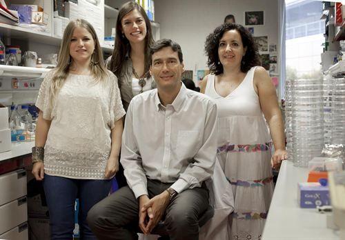 Científicos españoles pioneros en producir células madre embrionarias en organismos vivos adultos