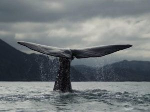 Blue Whale Facts For Kids - Small Animal Planet