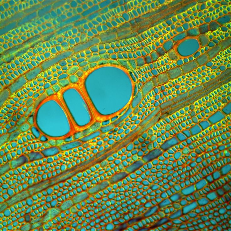 Fernan Federici's microscopic images of plants, bacteria, and crystals are a classic example of finding art in unexpected places.