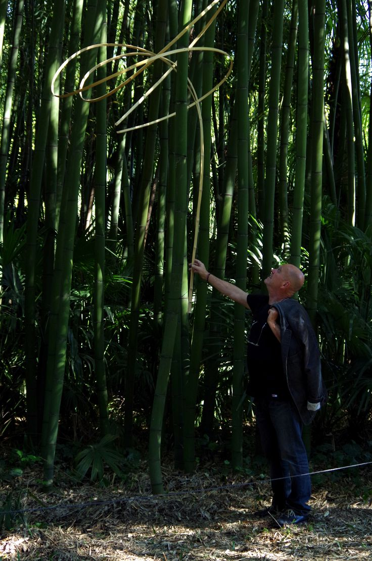 44 best Amazing bamboo images on Pinterest | Bamboo, Sculptures and ...