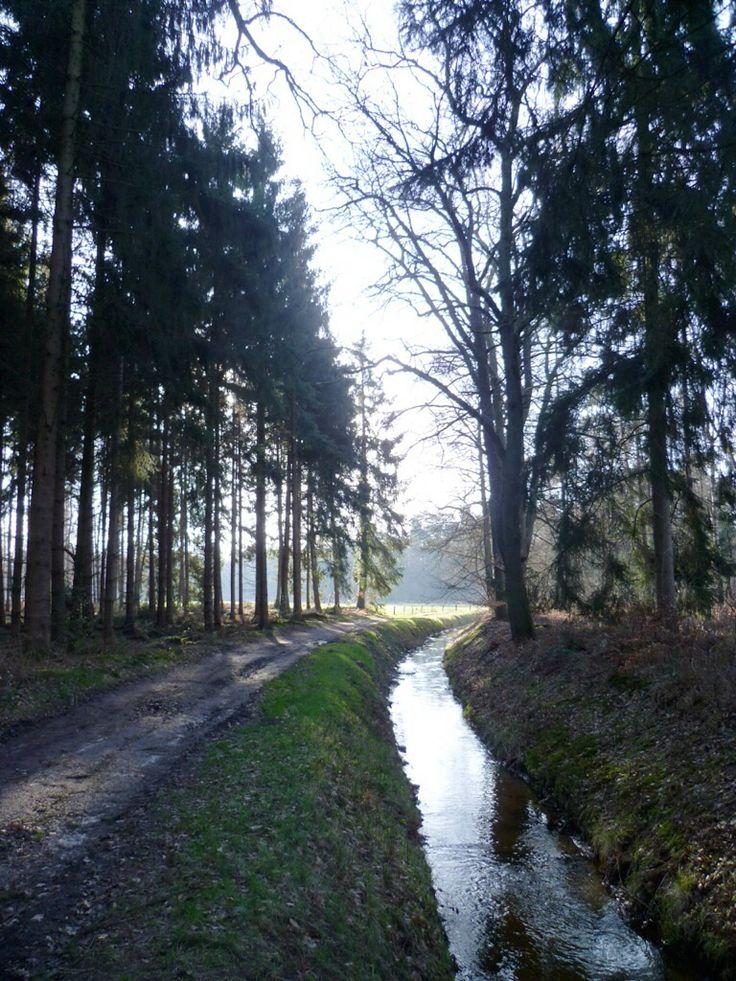 2014-02-23 Met de blauwe wandeling vanaf de Lankheterbrug kom je veel beekjes tegen met mooie doorkijkjes
