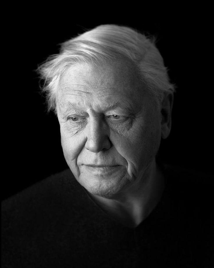 The wonderful gentlemen who inspired my love for nature. Sir David Attenborough portrait commisioned by NPG