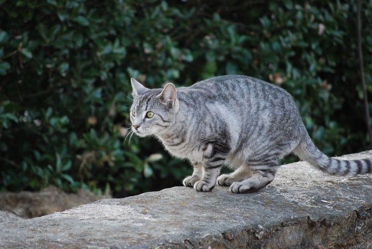 Silver Gray Tabby Cat Yellow Eyes Photos Grey Tabby Cats Silver