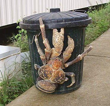 """Ce crabe des cocotiers compose avec cette poubelle un """"street art"""" original!"""
