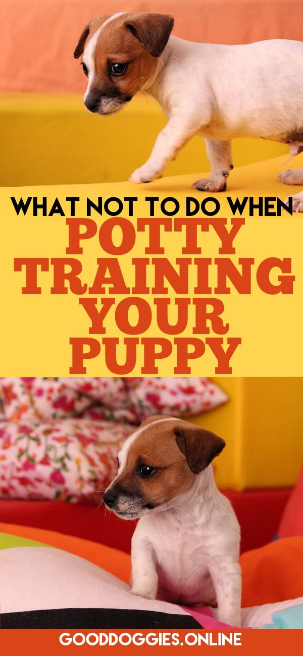 The 25 best potty training puppies ideas on pinterest for Dog potty training problems