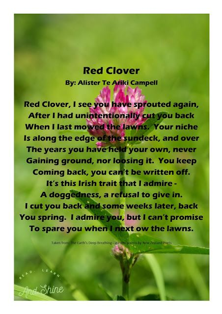 Read, Learn, and Shine: Red Clover