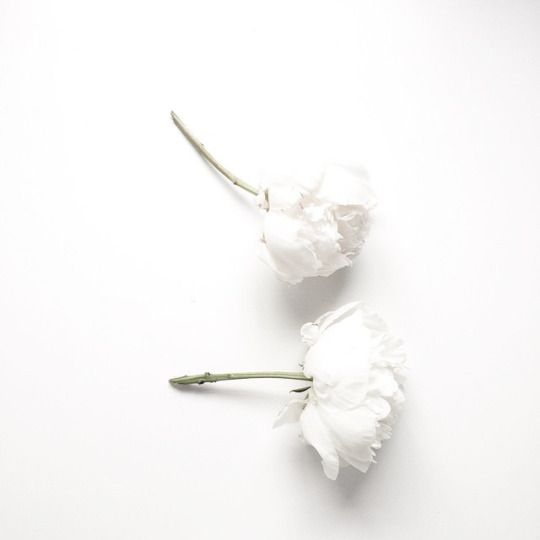 you, like a white flower, are beautiful and pure