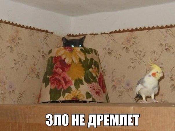 """У приятелей был попугай породы """"ара"""", он такой большой, красивый с огромным клювом. И вот так случилось, что надо было уехать и птицу пристроили к одному товарищу на время, а у того был кот, считающий себя главным если не в мире, то в квартире точно. Попугая принесли в клетке, поставили на стол и кот тут"""