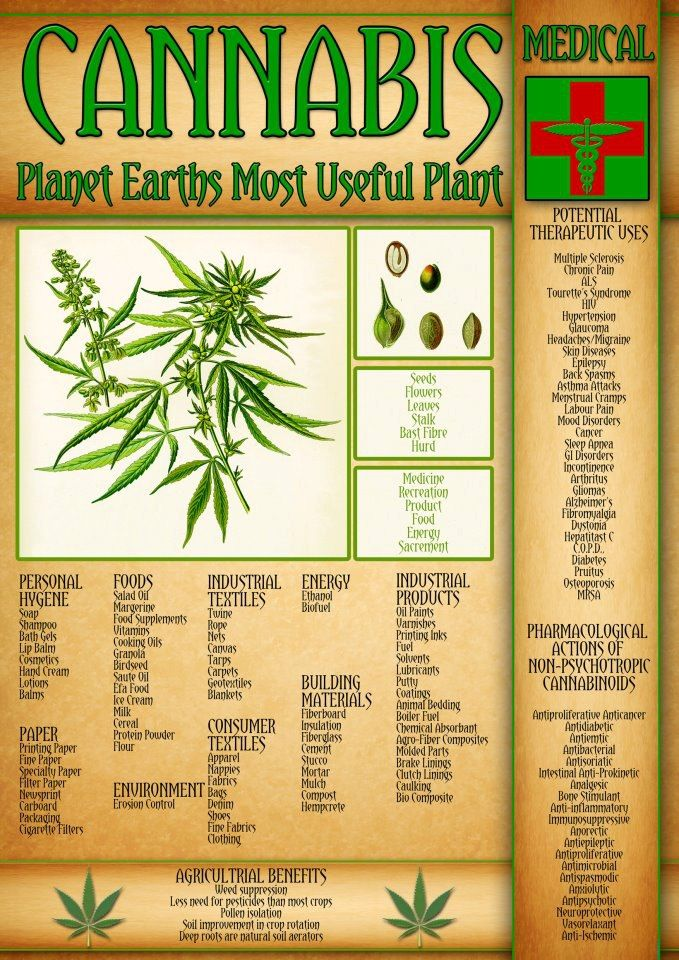Cannabis and Hemp. Planet Earth's most useful plant! Together, the possibilities for mankind are endless.