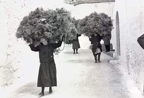 Γυναίκες στην Κάλυμνο μεταφέρουν κλαδιά για το άναμμα του φούρνου. Αρχείο Κέντρου Ερεύνης της Ελληνικής Λαογραφίας.