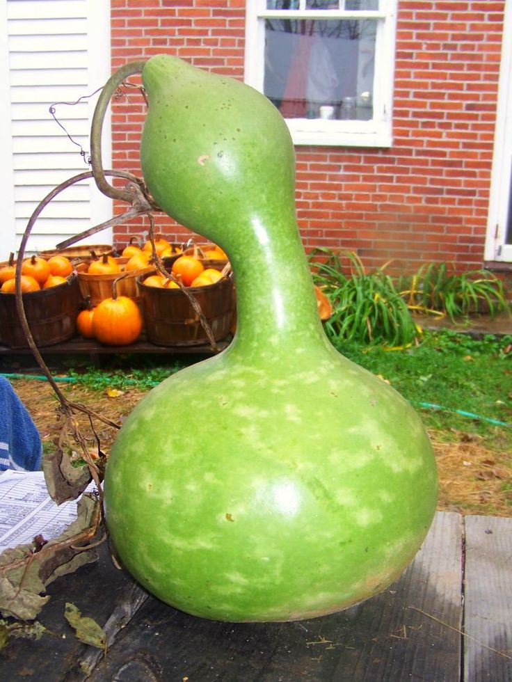17 best images about pumpkins and gourds on pinterest for Where to buy gourds for crafts