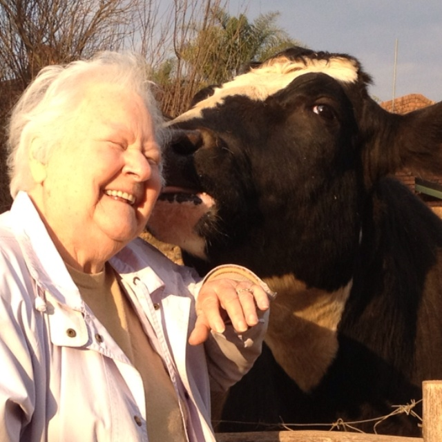 Doogle our pet ox dishing out some LOVE