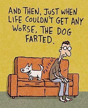 Dog, fart, funny, humor...@Della Chan Chan Combs this is sooo Charlie