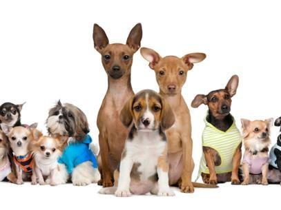 pet shop  Nomes para Cães Machos Letra C