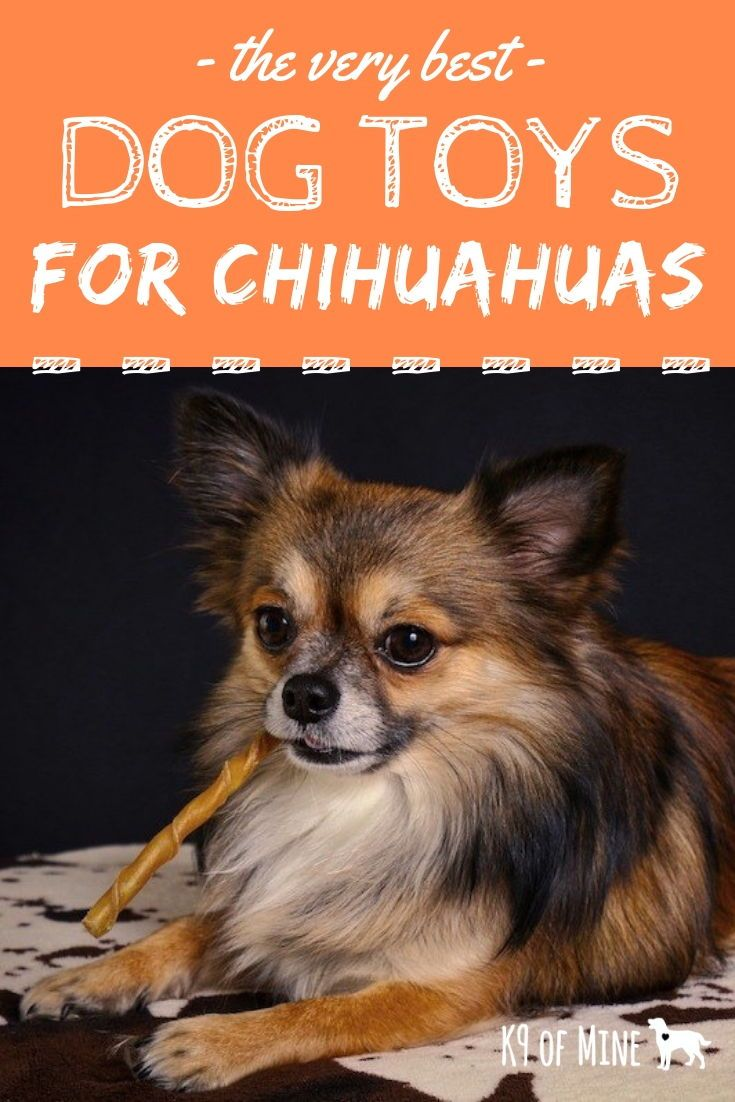4 Best Dog Toys For Chihuahuas Toys For Tiny Pups Best Dog