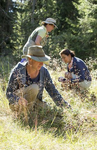 Ravanti Events, Picking Blueberries | by visitsouthcoastfinland #visitsouthcoastfinland #Finland #berries #marjat #outdoor #ravantievents