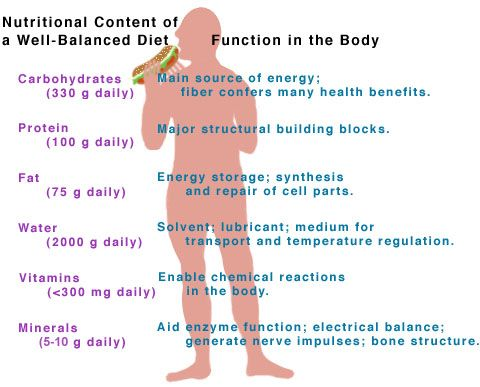 a description of how important proteins are in a human body Proteins in the body have essential jobs proteins are vital components of our bodies they form part of the body's structure and perform many essential functions, such the two fit together like a key fits into a lock, so the description of enzyme action is commonly referred to as the lock and key theory.