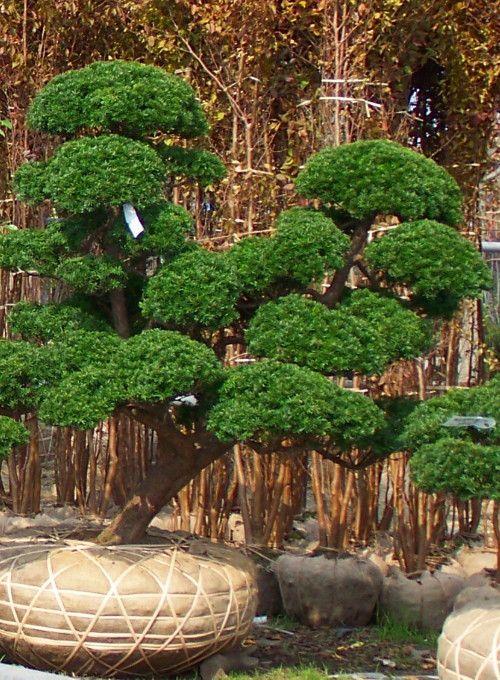 1000 id es sur le th me jardins japonais sur pinterest for Amenagement jardin oriental