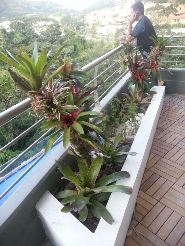 jardineras balcones con bromelias de sol